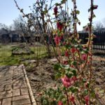 Parzelle 198 – Ein Monat voller Tatendrang | Gartentagebuch März 2020