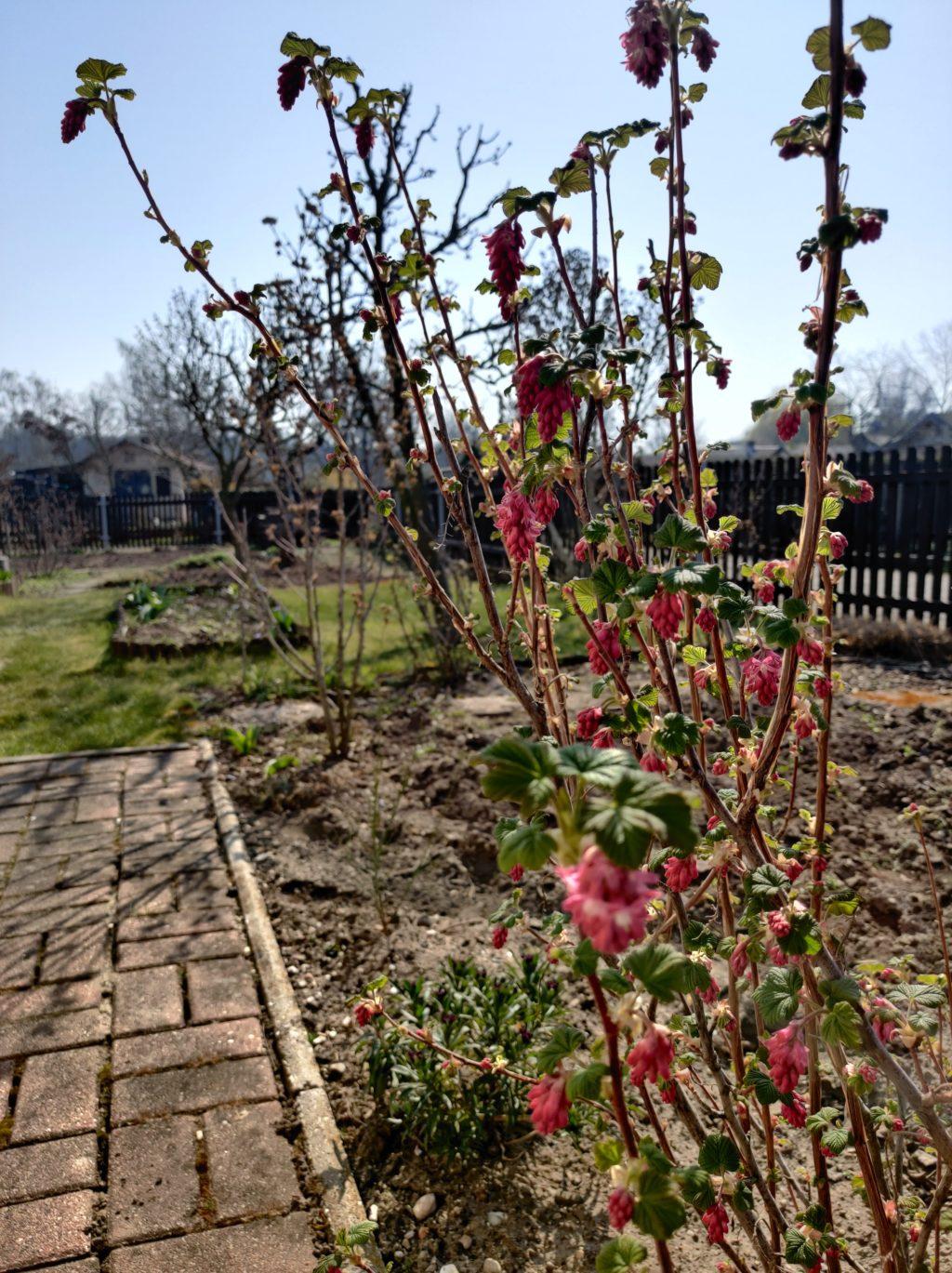 Parzelle 198 – Ein Monat voller Tatendrang | Gartentagebuch März 2020 3