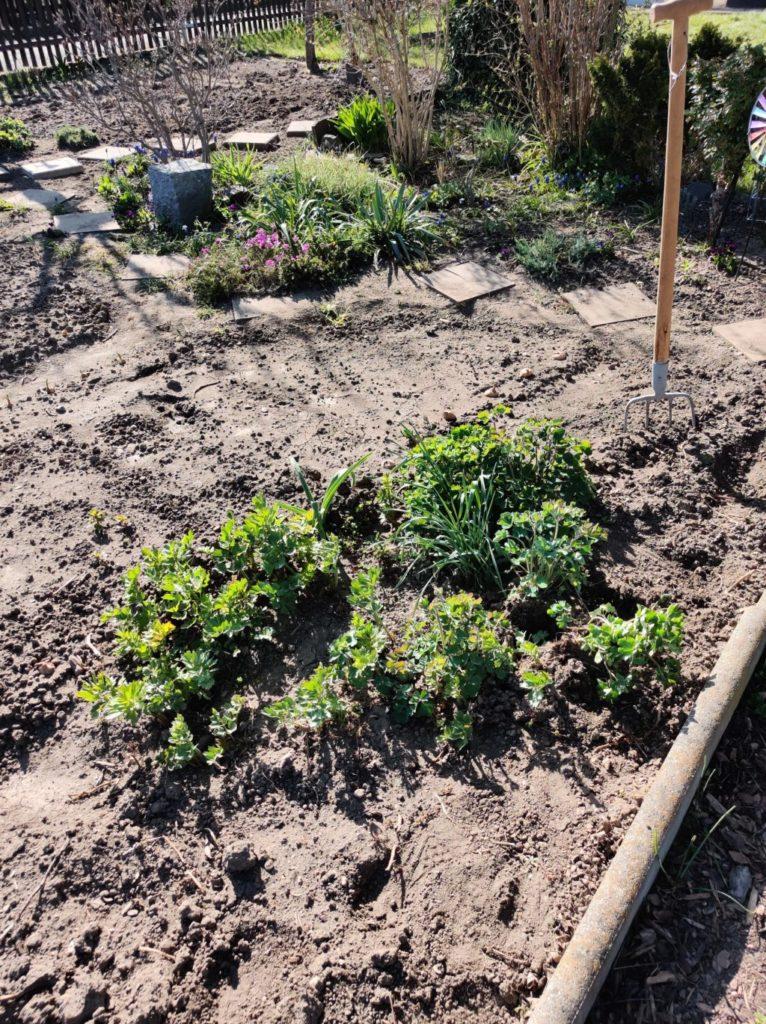 Parzelle 198 – Schaffe schaffe, Häusle baue | Gartentagebuch April 2020 10