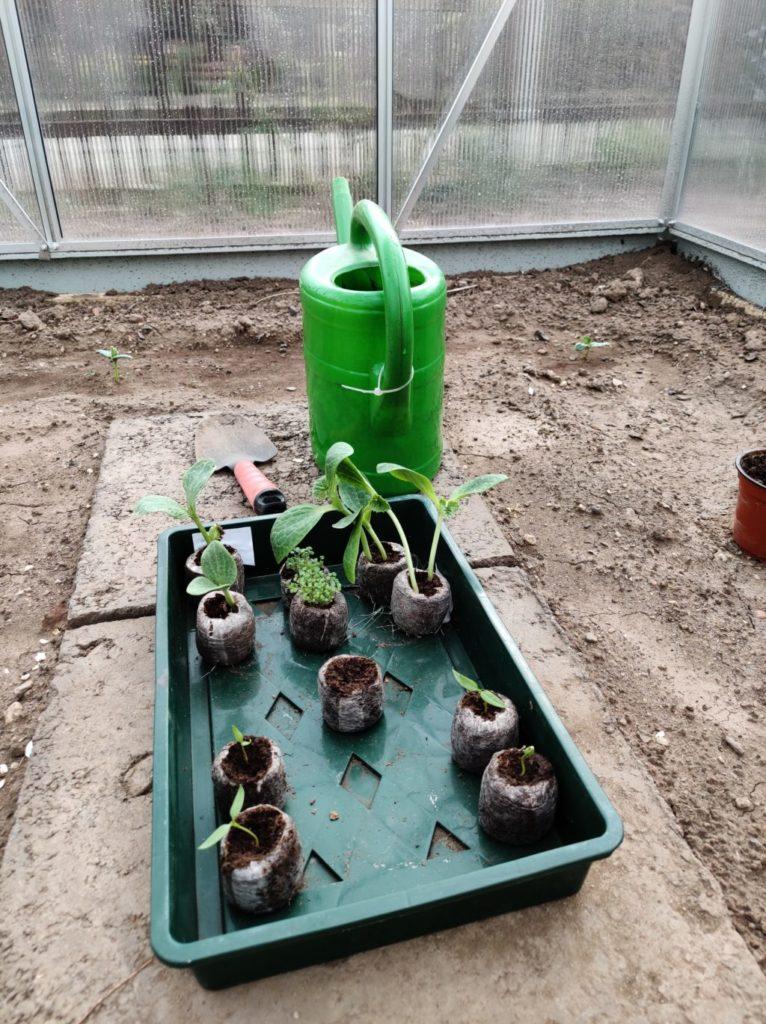 Parzelle 198 – Schaffe schaffe, Häusle baue | Gartentagebuch April 2020 20