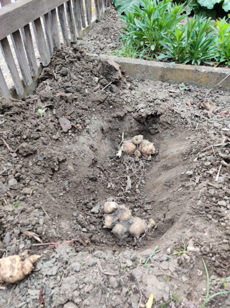 Parzelle 198 – Schaffe schaffe, Häusle baue | Gartentagebuch April 2020 21