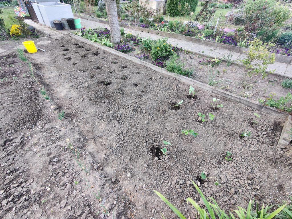 Parzelle 198 – Schaffe schaffe, Häusle baue | Gartentagebuch April 2020 30